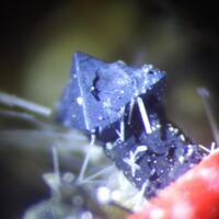 Magnetite & Apatite & Nepheline & Perovskite