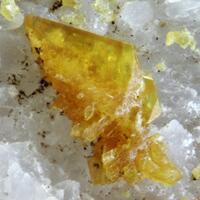 Trigonite