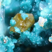 Herbertsmithite & Wulfenite
