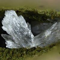 Collinsite & Fluorapatite