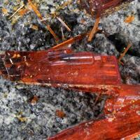Realgar & Native Arsenic