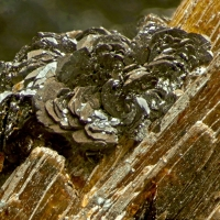 Pyrophanite On Astrophyllite