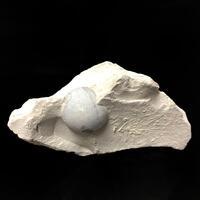 Opal Menilite