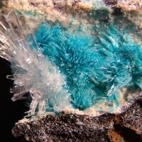 Kapellasite & Gypsum