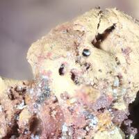 Abella Minerals: 13 Jul - 20 Jul 2020