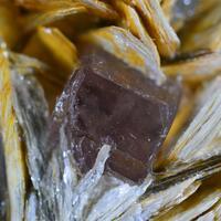 Fluorapatite With Muscovite