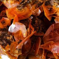 Eckel Minerals: 23 Sep - 30 Sep 2021
