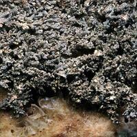 Kongsbergite & Chlorargyrite