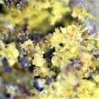 Thomas Progler Minerals: 24 Mar - 31 Mar 2019