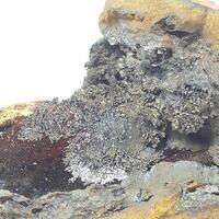 Todorokite & Lepidocrocite