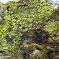 Trencapedres Minerals: 13 Nov - 20 Nov 2019
