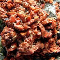 Crocoite With Vauquelinite & Coronadite