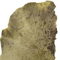 Wood Olivenite