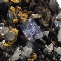 Fluorite Chalcopyrite & Quartz On Muscovite