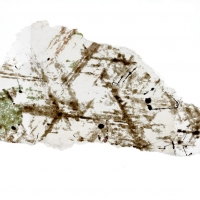 Muscovite With Magnetite