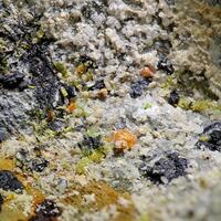 Wulfenite Pyromorphite & Cerussite