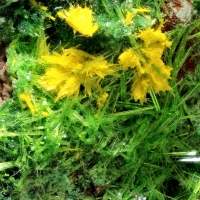 Schoepite Psm Rutherfordine & Cuprosklodowskite