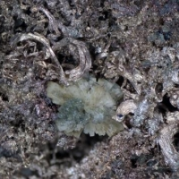 Native Silver Pearceite-T2ac & Stellerite