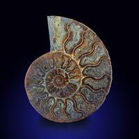 Calcite Psm Fossil