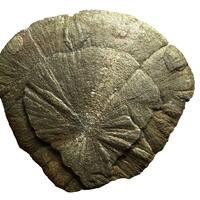 Pyrite Dollar