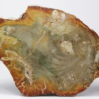 Chalcedony Var Petrified Wood