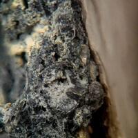 Zavaritskite & Bismuth