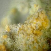 Curite Uranophane
