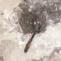 Emplectite Bismuthinite Fluorite