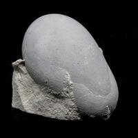 Menilite Opal