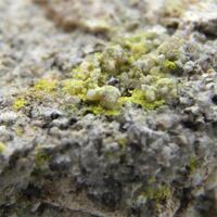 Phurcalite
