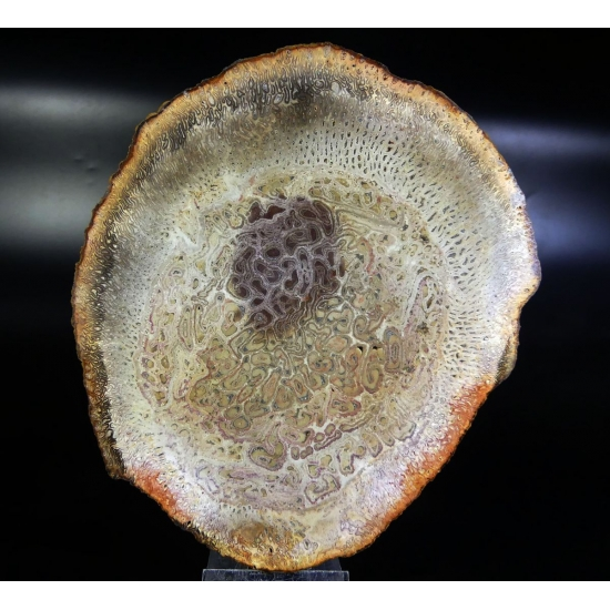 Agate Psm Fossil Wood