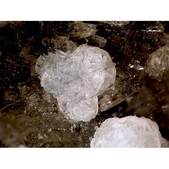 Phacolite & Calcite