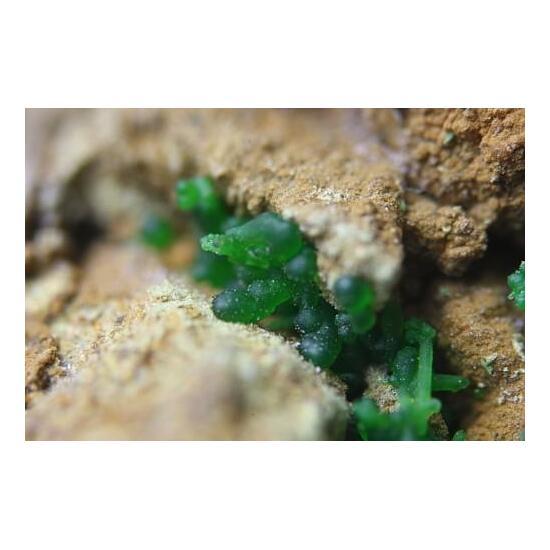 Barahonaite-(Fe) Arsenosiderite & Conichalcite