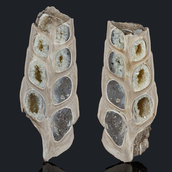 Fossil Gastropod & Calcite