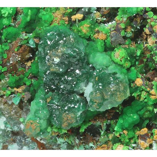 Conichalcite Cuprite & Cuprian Adamite
