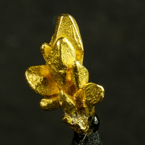 Gold Var Palladian Gold