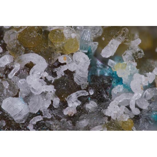 Cuatrocapaite-(NH4) Lucabindiite & Lavendulan