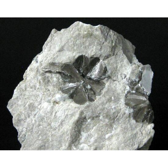 Star Gypsum