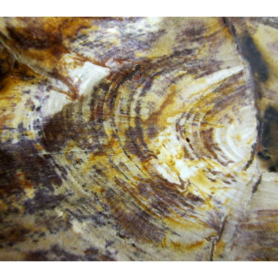 Chalcedony Psm Fossil Wood