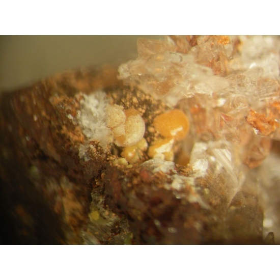 Rutherfordine & Gypsum