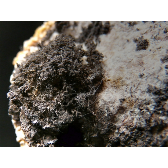 Chlorargyrite With Kongsbergite