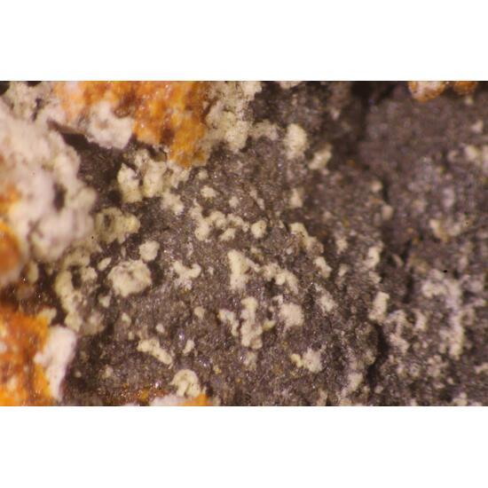 Lasalite & Dickthomssenite