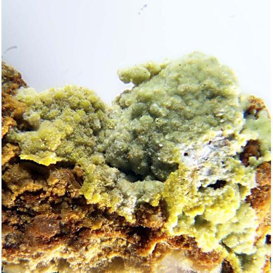 Ankinovichite