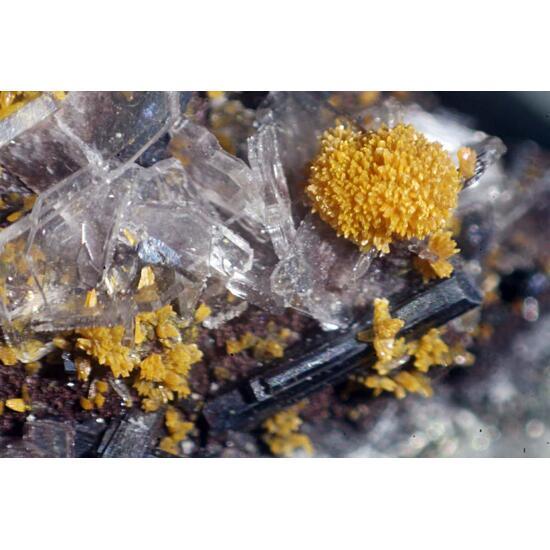 Argentobaumhauerite & Hutchinsonite