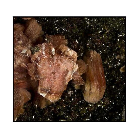 Cobaltaustinite Talmessite Colbaltoan Picropharmacolite Spherocobaltite & Quartz