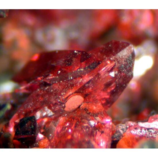 Wendwilsonite & Cobaltaustinite