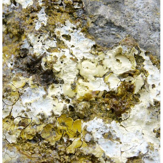 Ganomatite On Skutterudite