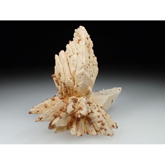 Calcite Psm Gypsum
