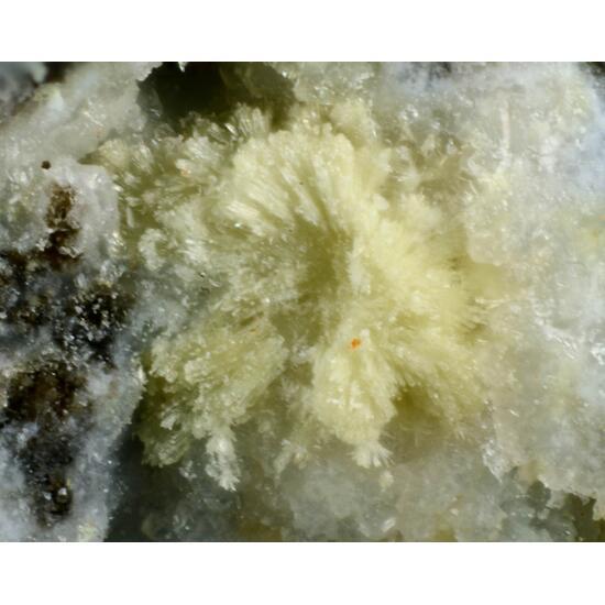 Adranosite-(Fe)