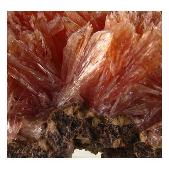 Orlymanite & Inesite
